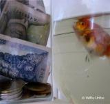 Moneda extranjera y gallifantes