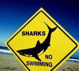 Ander Uriarte y los tiburones
