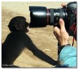 El mono y las fotos
