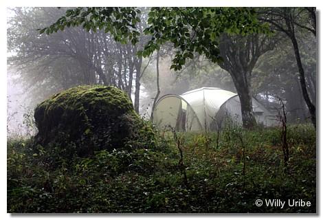 El bosque. El silencio WU PHOTO © Willy Uribe