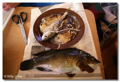 Pescado fresco de arpón y de anzuelo. WU PHOTO © Willy Uribe