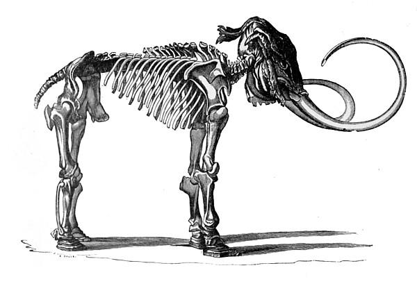 Esqueleto de mammut. Tengo Sitio Libre. Cuaderno digital de Willy Uribe.