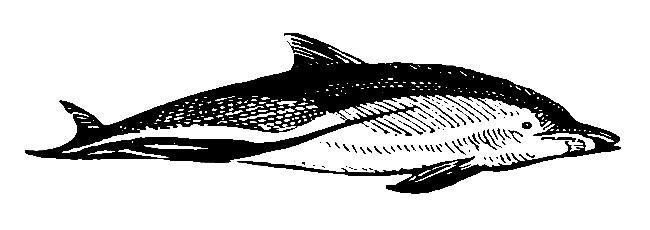 Delfín. Dolphin. Tengo Sitio Libre. Blog de Willy Uribe