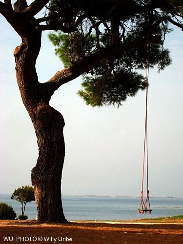 Columpio en Veli Rat. Isla de Dugi Otok. Dalmatia. Croatia WU PHOTO © Willy Uribe