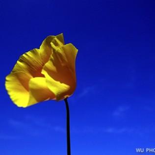 Flor del diablo. Chile. WU PHOTO © Willy Uribe Archivo fotográfico Reportajes