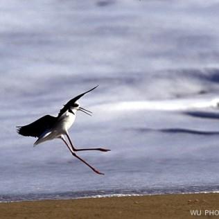 Costa de Atacama. Chile. WU PHOTO © Willy Uribe Archivo fotográfico Reportajes