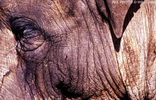 Piel de elefante. Elephant skin. WU PHOTO © Willy Uribe
