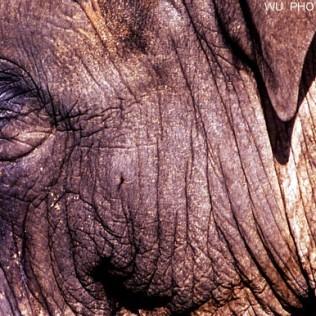 Piel de elefante. Elephant skin. WU PHOTO © Willy Uribe
