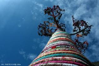Baobab. London. WU PHOTO © Willy Uribe Archivo Fotográfico Reportajes