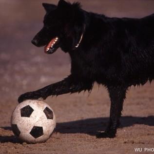 Perro. Fútbol. Balón. WU PHOTO © Willy Uribe Archivo Fotográfico Reportajes