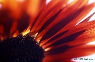 Flor. Detalle pétalos. WU PHOTO © Willy Uribe Archivo Fotográfico Reportajes