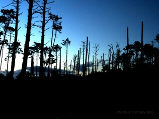 Dead forest WU PHOTO © Willy Uribe