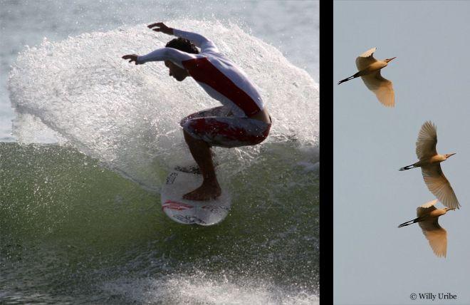 048 surfeinII