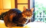 Los ojos del gato. Willy Uribe.