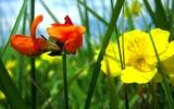 Cada flor. Tengo Sitio Libre. Blog de Willy Uribe